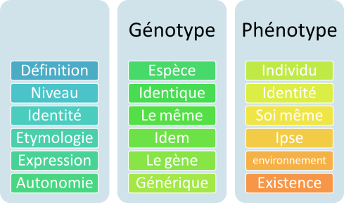phenotype_genotype_definition_genetique