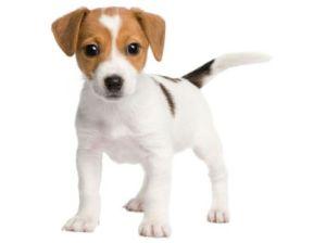 chien_meilleur_ami_homme_relation