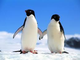 pingouin_méthode_changement_alerte_banquise