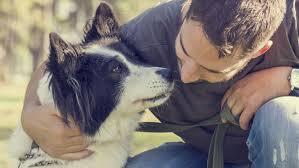 relation_homme_chien